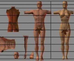 Пропорции фигуры человека