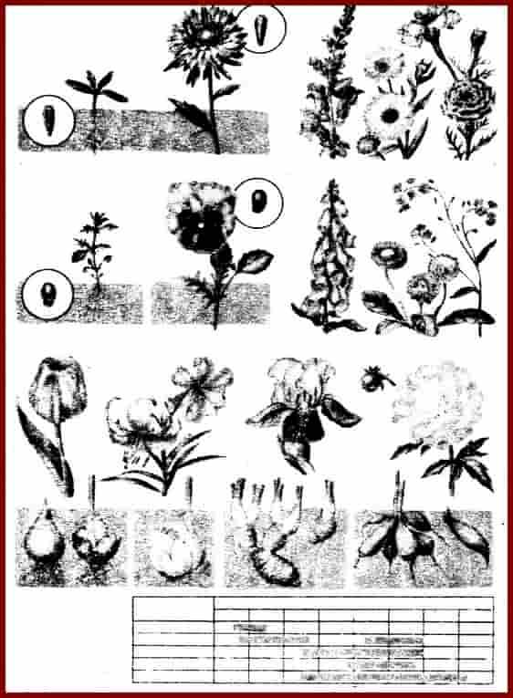 Декоративные растения. Таблица