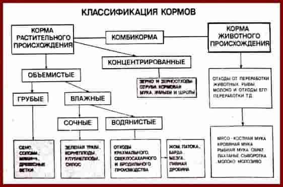 Классификация кормов. Таблица