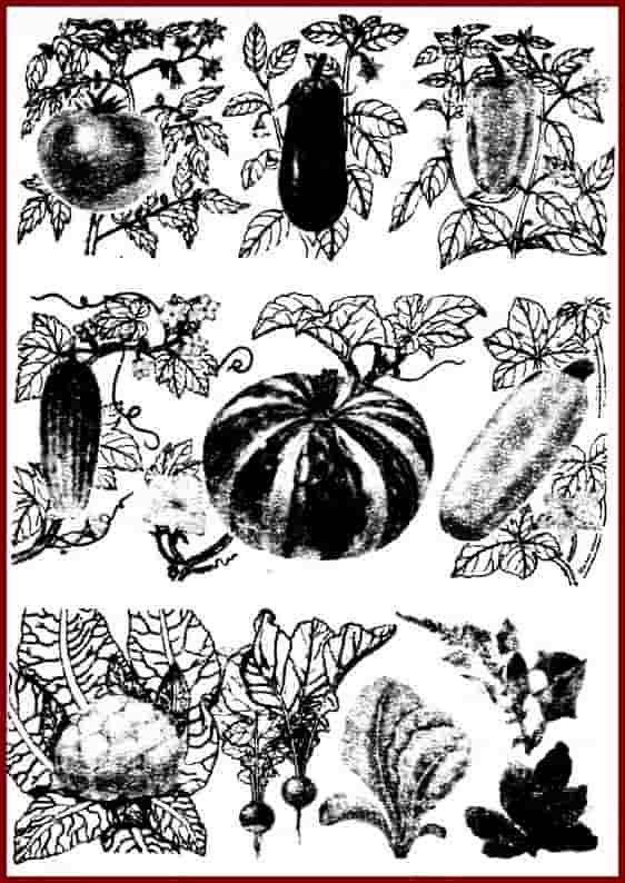Однолетние овощные культуры. Таблица