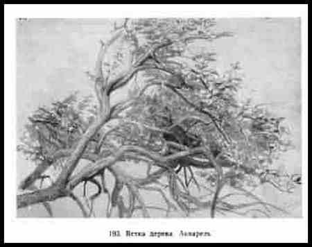 Ветка дерева. Акварель