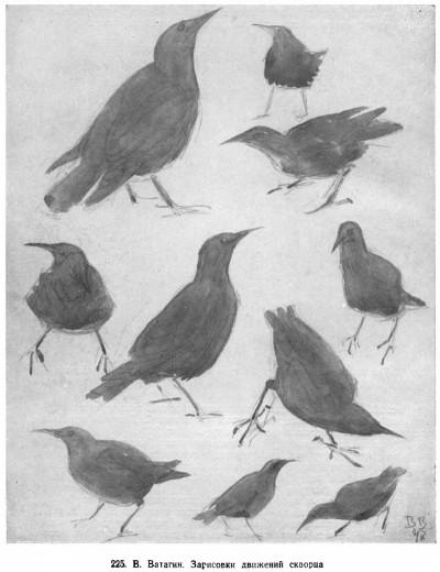 Зарисовка движений скворца