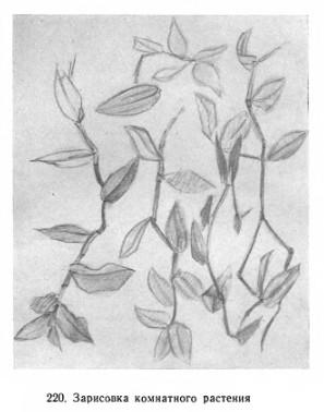 Зарисовка комнатного растения