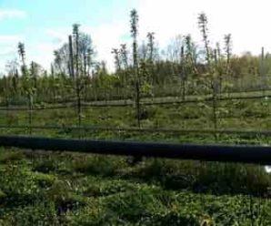 Особенности полива сада в Сибири